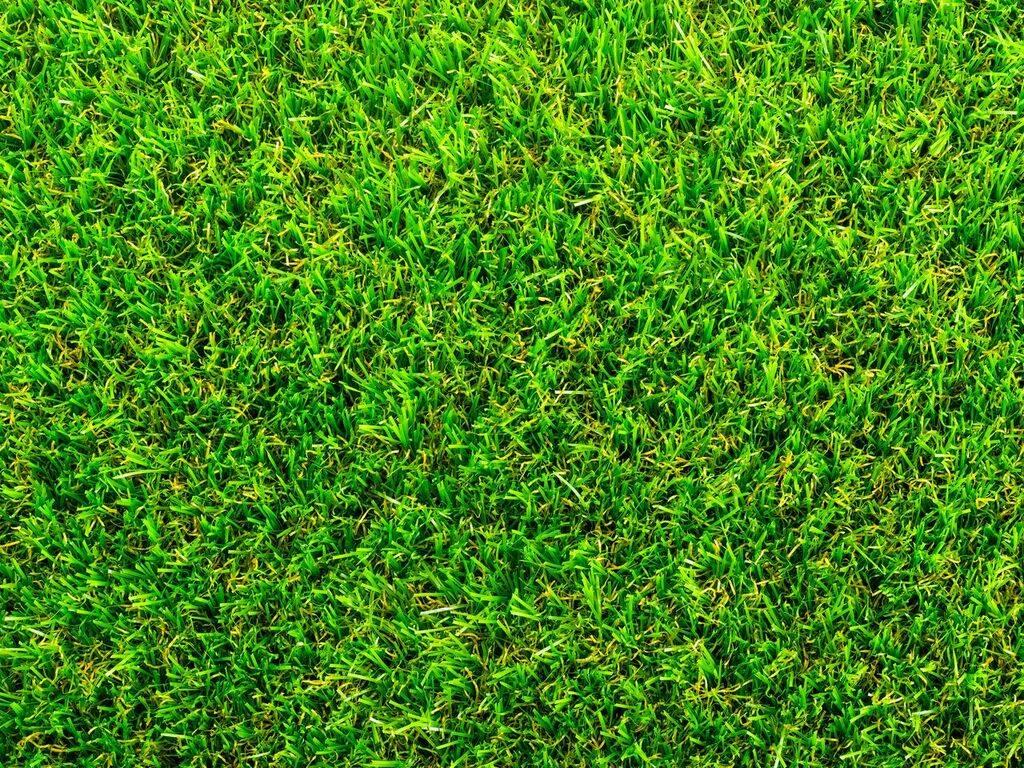 Copse grass
