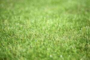 Artificial grass close up