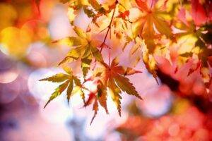 A picture of autumn leaves