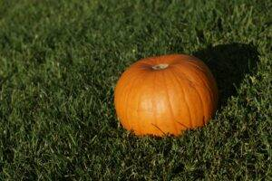 A picture of a pumpkin on artificial grass