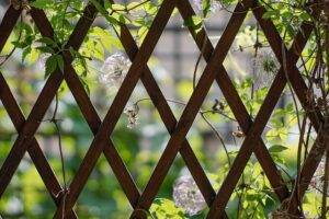 A picture of a trellis
