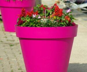 A picture of a flower pot