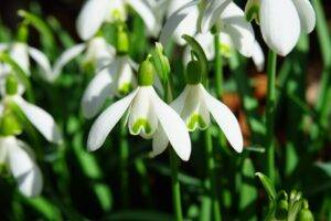 A picture of green and white flowers
